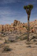 Rock Climbing Photo: tree