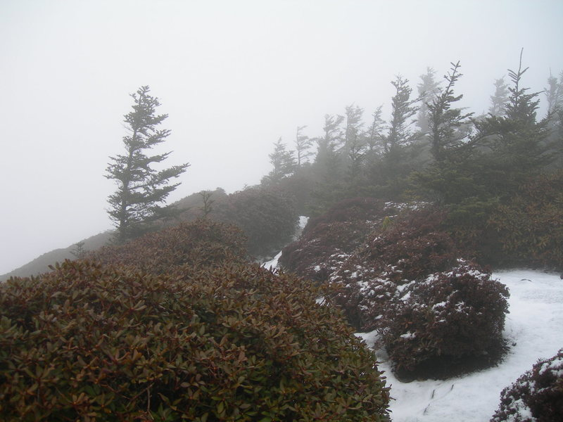Summit of LeConte