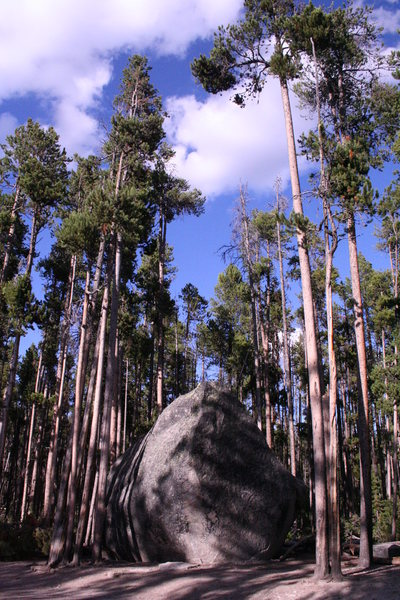 Glacial Boulder is located among many lodgepole pines.