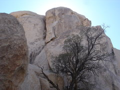Rock Climbing Photo: Early Bird upper headwall, lower crack/layback not...