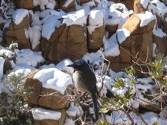 Rock Climbing Photo: Snow Bluejay