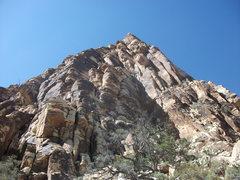 Rock Climbing Photo: pricks and ticks