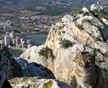 Rock Climbing Photo: Crag Kitty!  Tons of cats at the top of the Penon ...