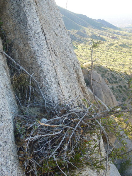 Rock Climbing Photo: The Hawk's nest from Beat Feat