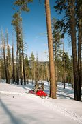 Snowmobiling near Mokelumne Peak
