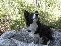 Rock Climbing Photo: Layla
