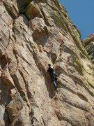 Rock Climbing Photo: The seldom seen Louka rock lizard.  This species t...