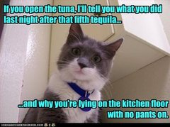 Why cats are clearly superior....