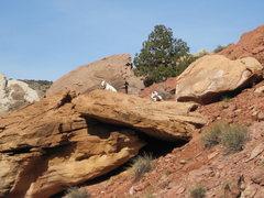 Rock Climbing Photo: The terrier keeps an eye on progress