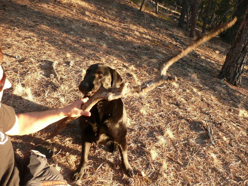 Elvis brings the firewood