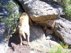 Rock Climbing Photo: get it