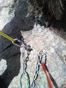 Rock Climbing Photo: Bolts at bottom of cedar tree.