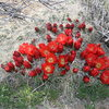 ROWCC Club Trip 4-9 to 4-11 2010.<br> Ten in a day trip.<br> Desert Blooms