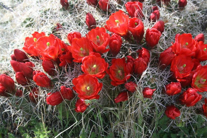 ROWCC Club Trip 4-9 to 4-11 2010.<br> Ten in a day trip.<br> Desert Blooms