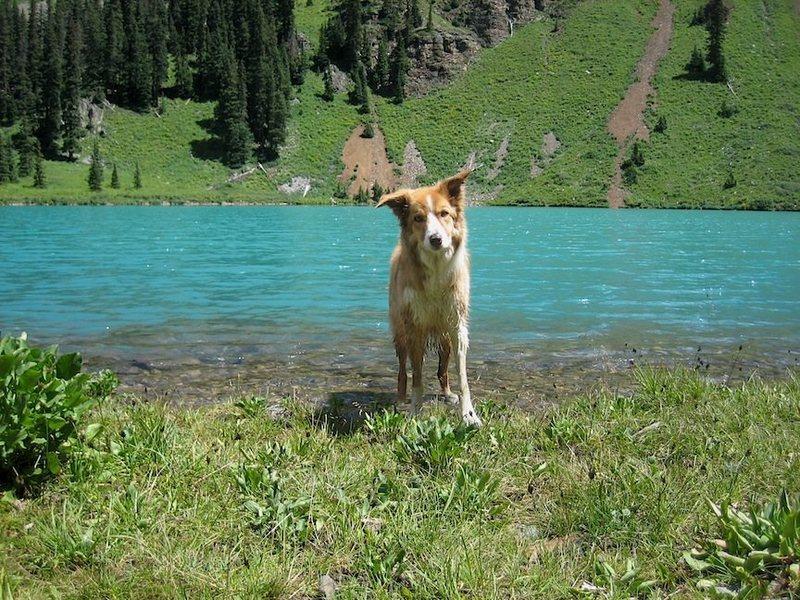Simon at Blue Lakes. Border Collies rule!