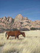 Rock Climbing Photo: horses at sheepshead