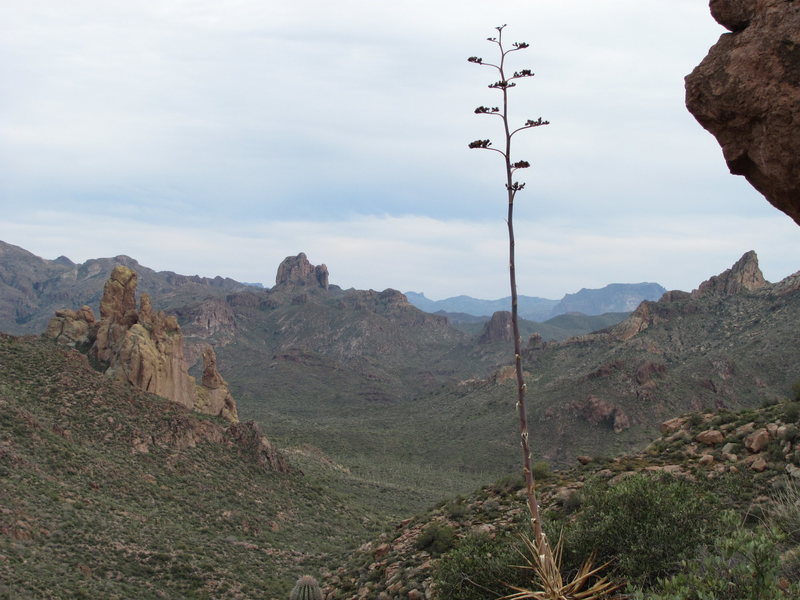 Rock Climbing Photo: the superstition mtns