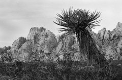 Rock Climbing Photo: Granite Mountains and Yucca. Photo by Blitzo.