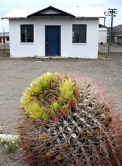 Rock Climbing Photo: Barrel Cactus and abandoned cabin, Amboy, CA. Phot...