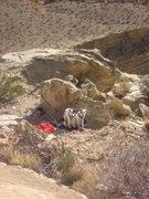 Rock Climbing Photo: Dog watch