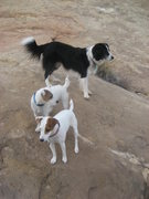 Rock Climbing Photo: Rosco,Nettle and Bess