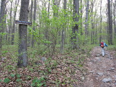 Rock Climbing Photo: Follow the signs along the AT to Annapolis Rock.