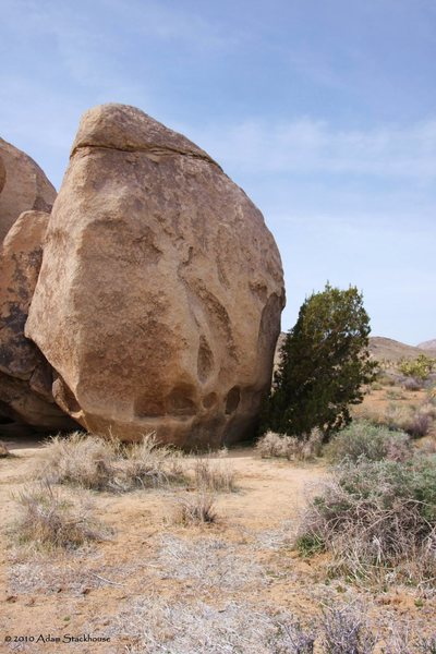 Rock Climbing Photo: Stems and Seeds (5.12a)