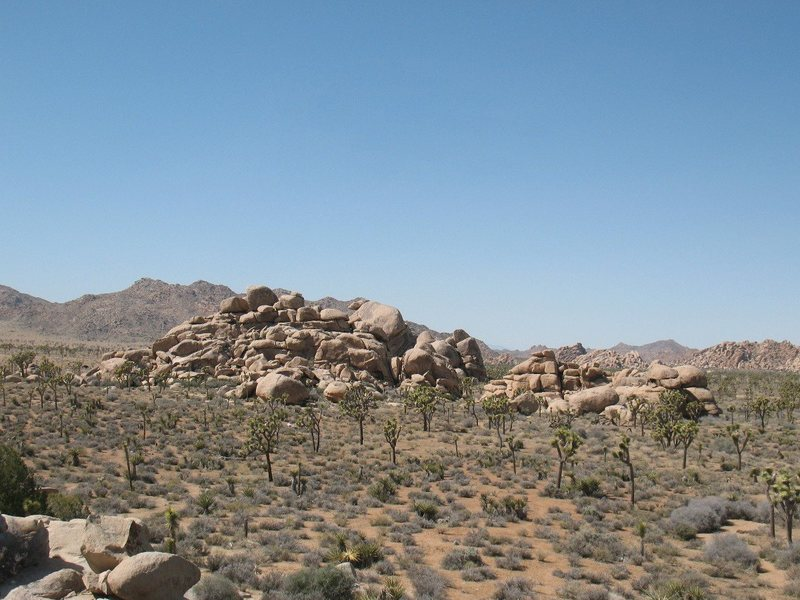 The view back to Cap Rock from Stonehenge, Joshua Tree NP