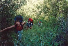 Rock Climbing Photo: The jungle. This is after the PO, we have changed ...