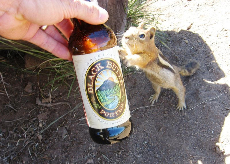 Thirsty critter in Bend, Oregon.