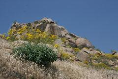 Rock Climbing Photo: The Island Area    4-24-10