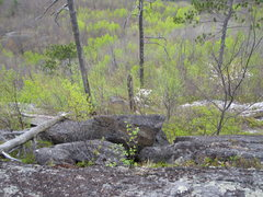 Rock Climbing Photo: Descending surrounded by flowers and the new leave...