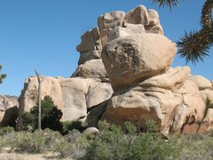Rock Climbing Photo: Romp Roof and Miledi Rock, Joshua Tree NP