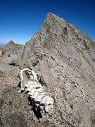 Rock Climbing Photo: deer skeleton below sill
