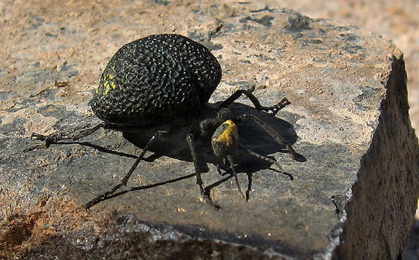 Rock Climbing Photo: A strange bug. Does anyone know what it is? Photo ...