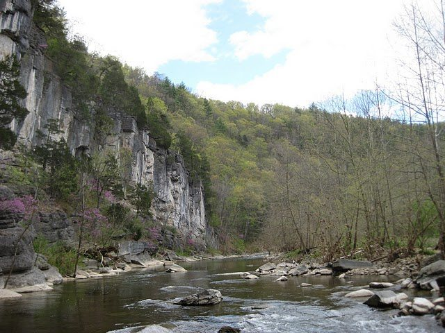 Rock Climbing Photo: Red buds in bloom. Franklin Gorge - River's Bend e...