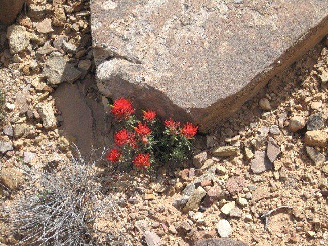 Rock Climbing Photo: Desert Flowers