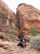 Rock Climbing Photo: Sam near top of P1... and Zo-Zo patiently waiting ...