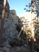 Rock Climbing Photo: Downed tress at jailhouse, you can almost clip the...