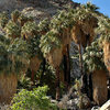 49 Palms Oasis.<br> Photo by Blitzo.