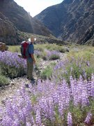 Rock Climbing Photo: The wildflowers were in full bloom in Surprise Can...