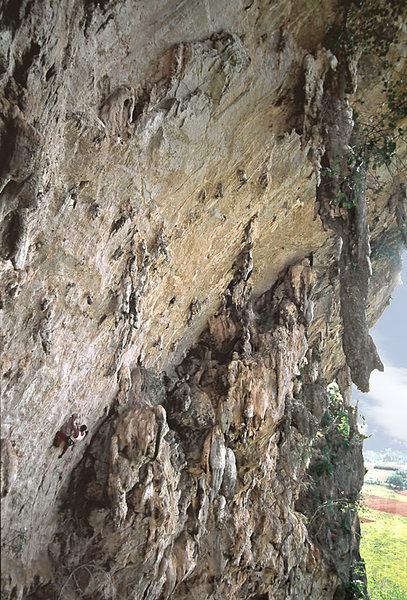 Rock Climbing Photo: Reinel Sosa on Wasp Factory, 5.12c / 7b+.