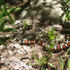 """I thought I heard someone talking about """"red on yellow kill a fellow, red on black venom lack"""" while I was climbing.  When I got home, I found this (and a few others) on my camera.  Seen below the un-named 5.8 on the far left."""