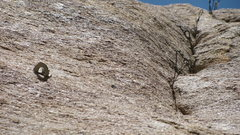 "Rock Climbing Photo: Lost Lid fixed ""junk""."