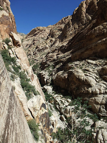 looking up Black Velvet Canyon