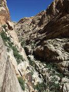 Rock Climbing Photo: looking up Black Velvet Canyon