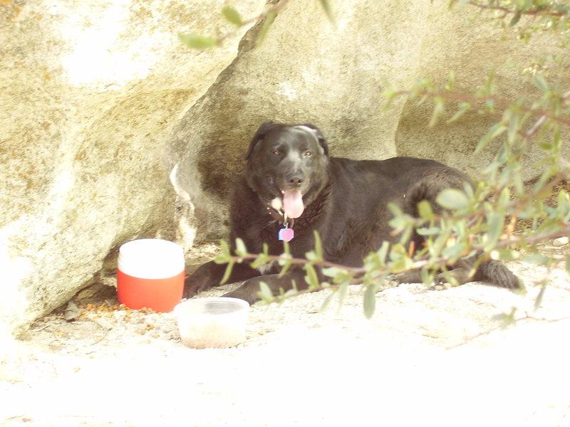 Rock Climbing Photo: Harley guarding the food.