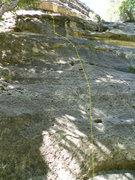 Rock Climbing Photo: beta photo- Lap Dance