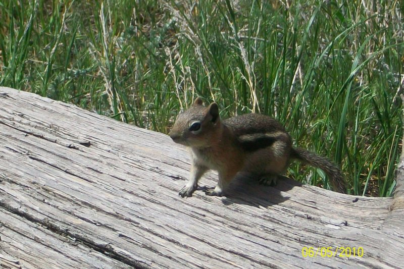 Rock Climbing Photo: On the hike up this little guy came out to get his...