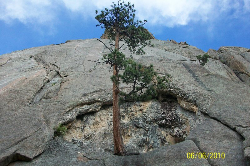 Rock Climbing Photo: Cool tree